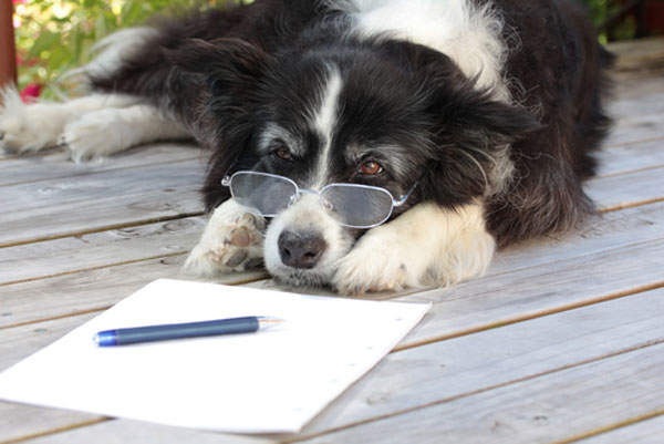 letter-writing-week-dog-1 0